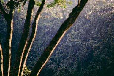 Sayan, Valley, Rain Forest, Ubud, Bali