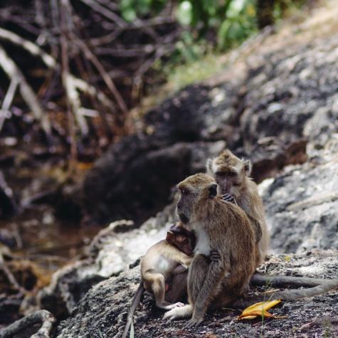 Monkeys, Flores, Komodo, Rinca, National Park